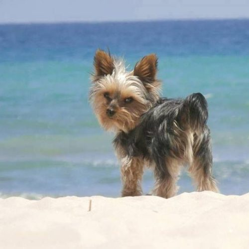 pet friendly Playa Paraiso